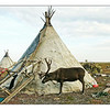 Nenets yurt (tent) & reindeer. (4.16.2012)<br /> <br /> Not a new shot, but one we just learned is to be included in an exhibit on prehistory at the Royal Belgian Institute of Natural Sciences' Museum. The exhibit's scheduled to run from October 16th of this year through May 26, 2013. Of course, October's a long way off & things can change, but... May just have to schedule a trip to Brussels...<br /> <br /> On another note, the thumbs downer has been so active recently that I'm going to take a break from the Dailies - it just isn't very enjoyable of late. I looked at the top 30 shots from yesterday when I had a moment Moscow morning time today. The shots with the most comments were Papa's & Billie's each with 34 comments. Papa's was in 6th position; Billie's in 17th. Next up with quantity of comments were Paul B. (Jr.), Paula B., Webstersway & my egg shot - each with 31 comments - position of these shots? 5th, 2nd, 1st & 26th respectively. Someone really disliked my egg shot, that's for sure. This person was at it again this A.M. downing Indigo's shot within minutes of it coming up.<br /> <br /> Thanks to those of you who've been supportive & many of you for your friendship. We may be back, but it's time for a break. Happy shooting.