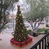 Dec 11... Christmas tree at Pruneridge shopping center.