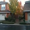 Nov 27... rain and pretty fall colors on the tree across the street.