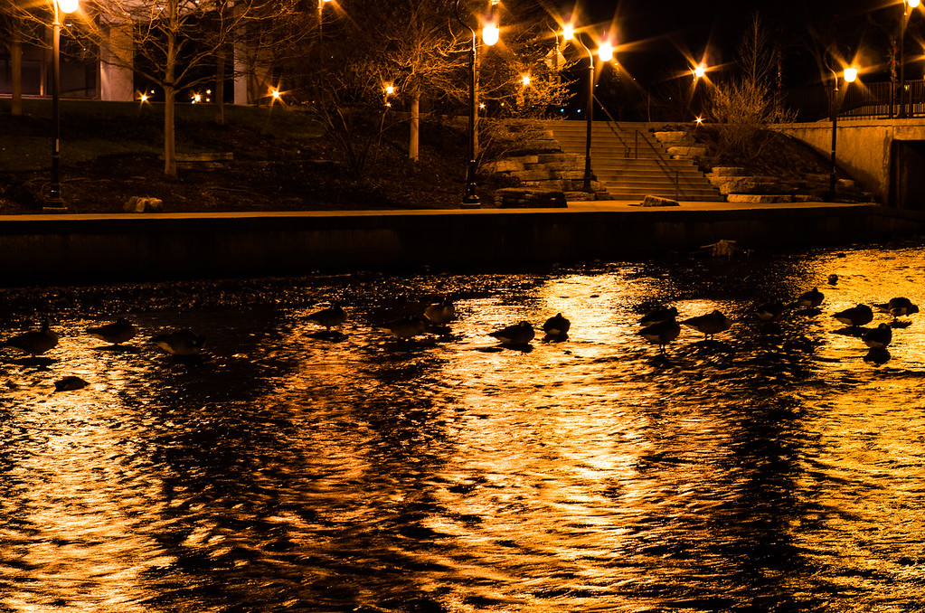 The theme for this week comes from DPreview:  peace.  A late night shot of geese and ducks sleeping in the midst of a river (low water levels right now).  I left the white balance at a more golden tone as it seemed to fit the mood better.  F6.3, 1/6 sec at ISO800, hand held (which led to many more blurry shots than not this night)