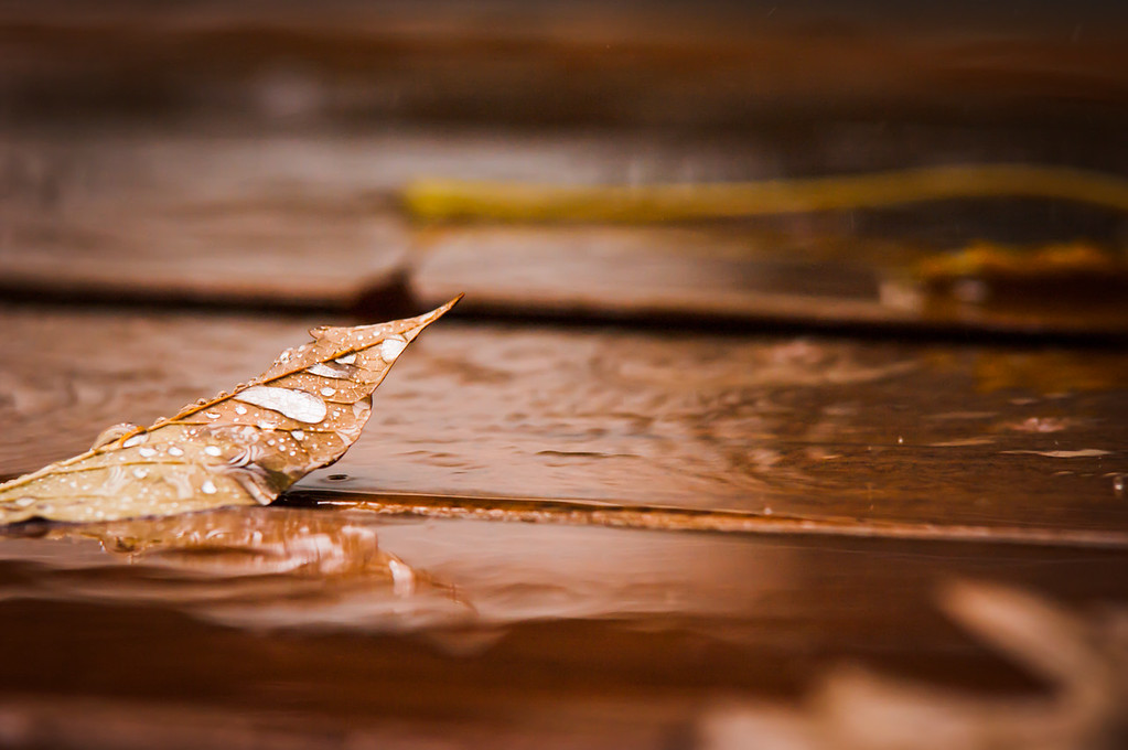 Another view of the leaf in the rain