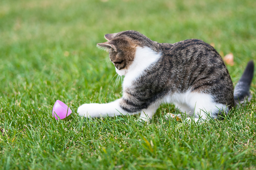 strange cat has a vendetta against plastic easter eggs