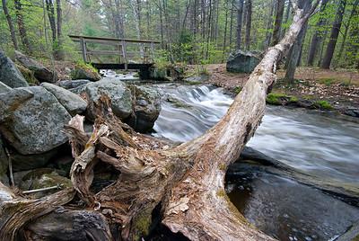 Log Bridge Spring, taken May 10, 2008.