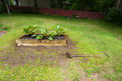 The finished bed with the 3 new plants in place. I will transfer the old plants to the bed as well.