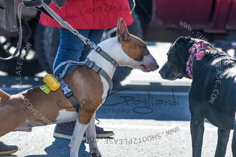 From Denville_Lunar_New_Year_2019 game on Feb 10, 2019 - Joe Gagliardi Photography