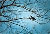 Birds_8
