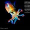 PNW Diver - Page 34