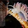 PNW Diver - Page 32