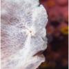 Dive Magazine - Featured Photographer Feb 11, 2021