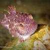PNW Diver - Page 36