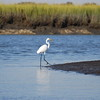 """River Walk"" Great American Egret walks along the river at Beach Creek entrance. Wonderful life in St. Marys Georgia! Featured photo in the Enhancing Your Quality of Life 2010 Annual Report to the Citizens of Camden County, by the Board of Commissioners. Visit  <a href=""http://www.co.camden.ga.us"">http://www.co.camden.ga.us</a>"