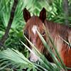 Horse peeking through palms