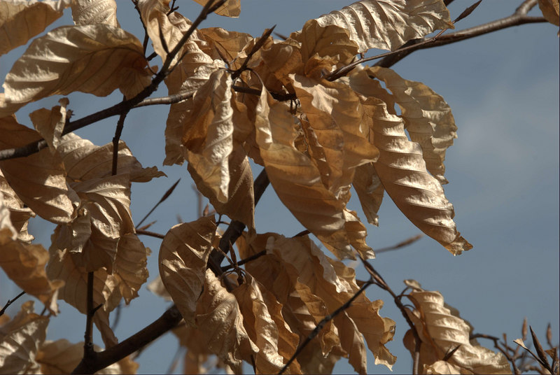 Puddingstone Park Leaves