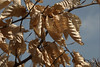 Puddingstone Park Leaves