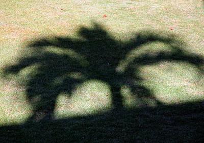 arboreal shadow