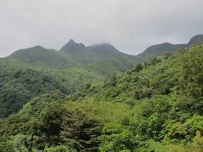 There are a couple of observation towers that you can climb to the top of to get a view of the surrounding forest. In this photograph I am at the top of the observation tower looking up at Mount El Yunque. The previous photograph was taken from the top of that mountain looking down at this observation tower.