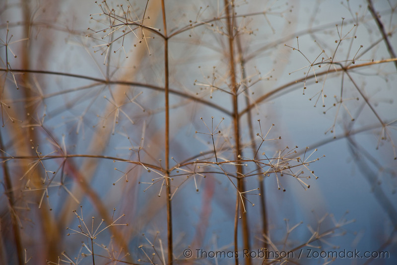 A shallow depth of field shot through these plants situated on a pond near Snoqualmie Falls creates a fascinating focus effect.