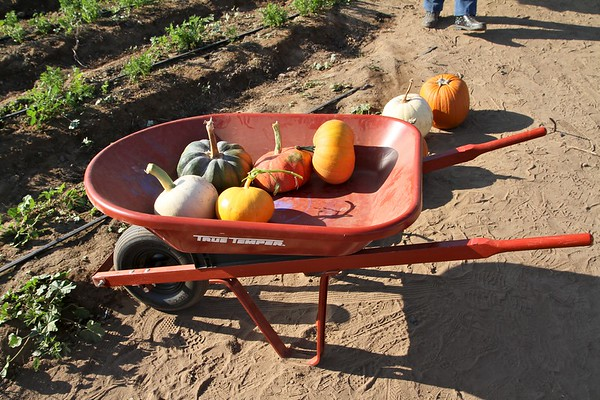 Pumpkinpalooza3