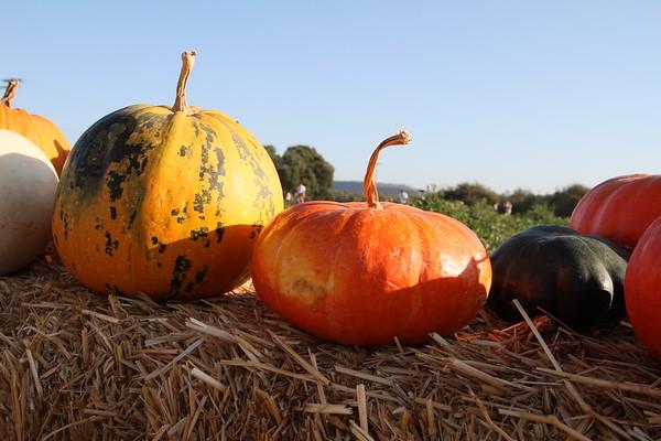Pumpkinpalooza24
