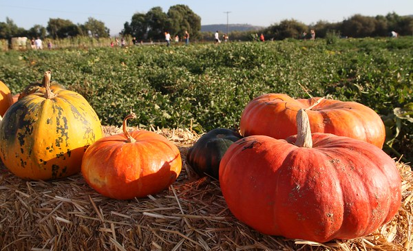 Pumpkinpalooza22