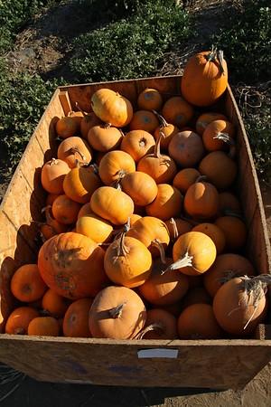 Pumpkinpalooza23