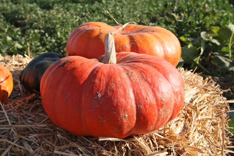 Pumpkinpalooza21