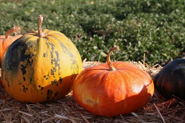 Pumpkinpalooza19