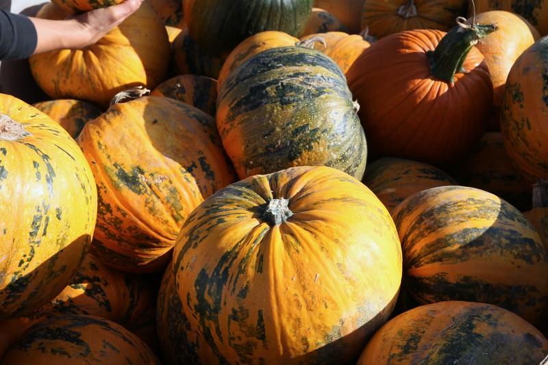 Pumpkinpalooza16