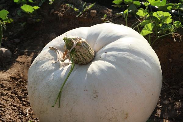 Pumpkinpalooza17