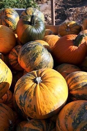 Pumpkinpalooza18