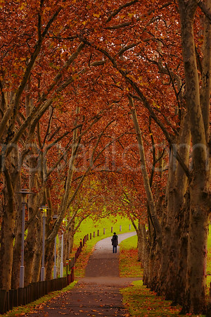 Montefiore Hill - An Autumn Walk