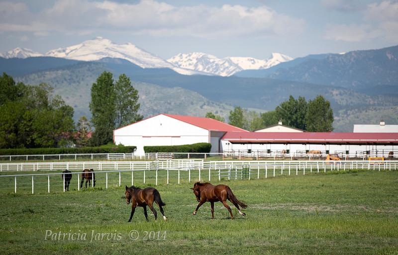 RM barn-horses-68A4689