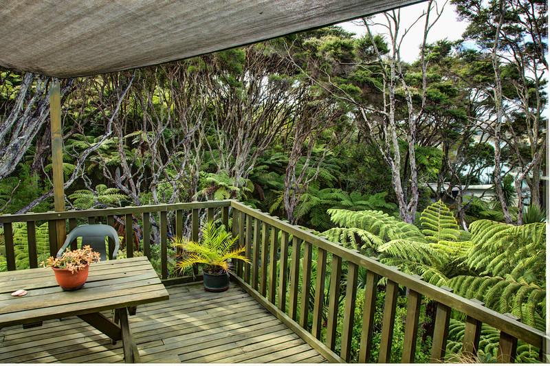 Native bush - from my western deck - February 2013