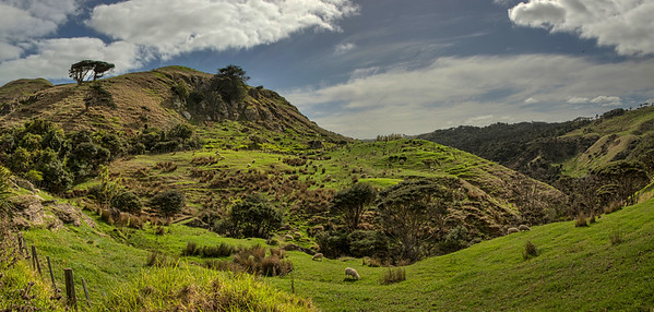 Between Raglan and Te Akau3
