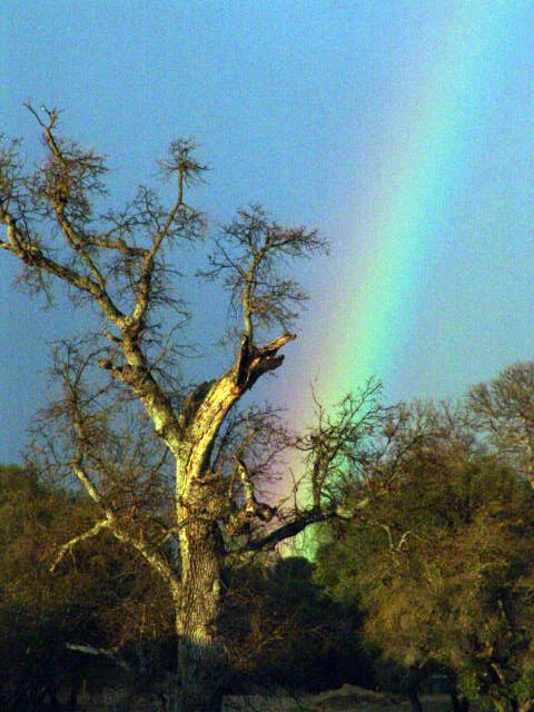 Oakhurst CA Rainbow 3-06