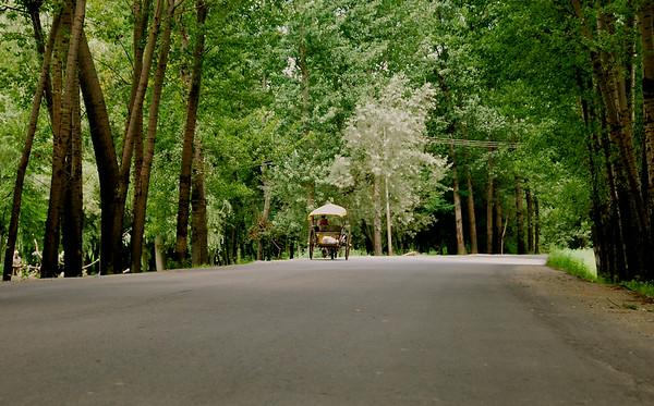 Srinagar : Kashmir