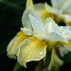 2009_flower_20090612-5