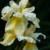 2009_flower_20090612-2