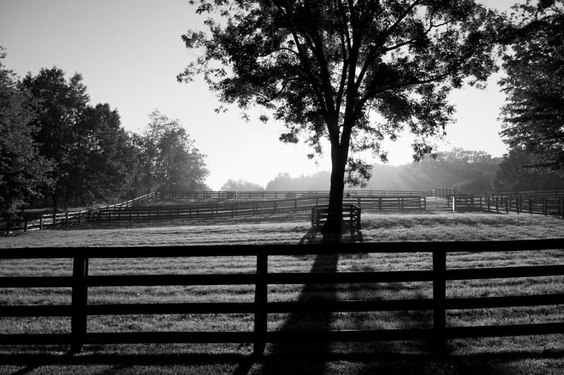 In Bedford - ©David Shapiro 2011