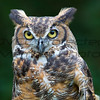 Great Horned Owl 01 - Jim McMillan: jimmcmillan@prodigy.net