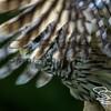 Steve Stanley. steve@stevestanleyphoto.com