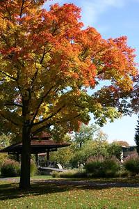 Tappan Square in Oberlin. (Photo by CT reader Karen Schrader.)