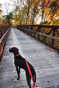 Max at the start of the Lorain County Metro Parks' Steel Mill Trail off Colorado Avenue in Sheffield. (Photo by Chronicle Web editor Rona Proudfoot.)