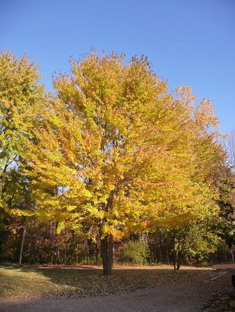 CT readers' fall foliage pics