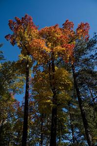 Oct. 21, 2009, at Cascade Park. (Photo by Scott M. Duncan Photography.)