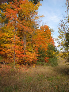 Burr Oak in the Lorain County Metro Parks. (Photo by Chronicle reader Dale Davies.)