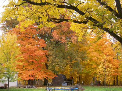 These are photos i took in my back yard. The colors are brilliant. The photos of the red maple tree with the carpet of leaves on the ground are a little dark. i don't know if you can brighten them up a little. The red trees are Japanese red maples and are just awesome in the fall. Didn't know if you could use these or not. These were taken on East Ave in Elyria.                                   Enjoy,                               Cathy Baumert