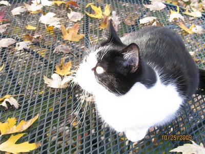 I can't leave(s) out Katie. Back yard, Livermore in Elyria Diane M. Mohrman