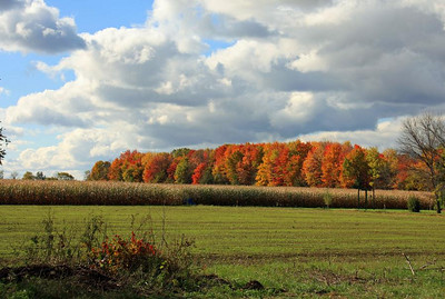 Along state Route 113 in Henrietta Township. (Photo by Chronicle reader Randy Meyers of Amherst.)