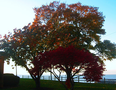 Trees on the Lake Erie shore behind Lorain Public Library (Domonkas branch) in Sheffield Lake. (Photo by Chronicle reader Cheri Campbell.)